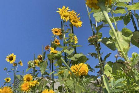 ビーチパーク花畑